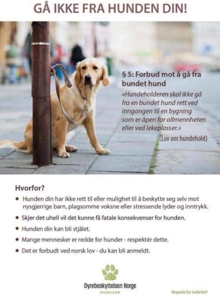 Gå ikke fra hunden din.